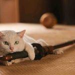 Pera Film'de Yeni Yılın İlk Konuğu Kediler!