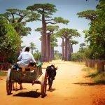 Madagaskar'ın Kalbine Egzotik Yolculuk