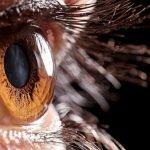 Türk Oftalmologları Dünyada Büyük Saygı Görüyor