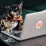 Köpek Otel Eleştirmenliği İle Yepyeni Bir Heyecan